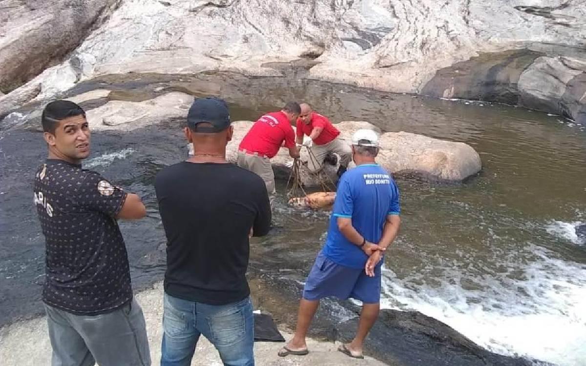 Corpo de homem é encontrado em córrego de Rio Bonito
