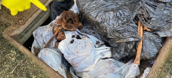 Restos mortais descartados de forma irregular são encontrados em Silva Jardim