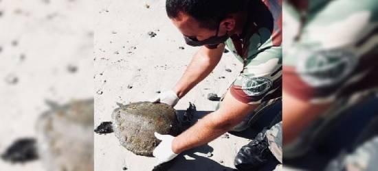 Tartaruga-verde é resgatada após encalhar em praia de Arraial do Cabo