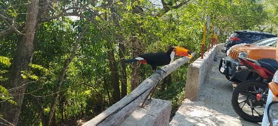 Tucano vira atração ao aparecer na área urbana de Rio Bonito